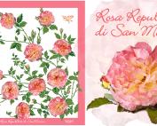 Rosa-Rep-di-San-Marino